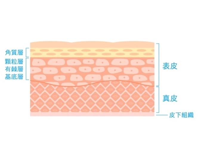 皮膚の構造-min